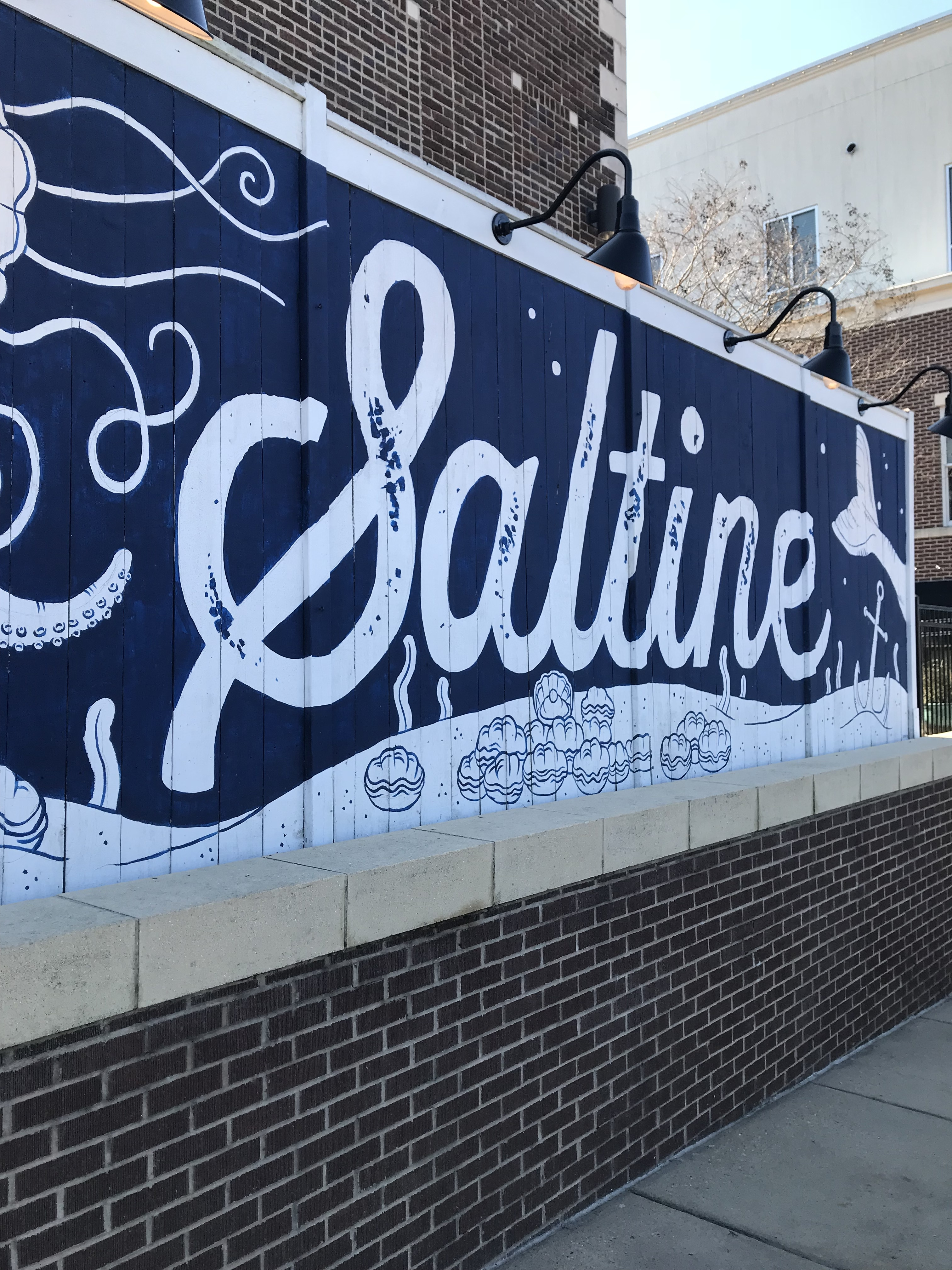 Saltine_1